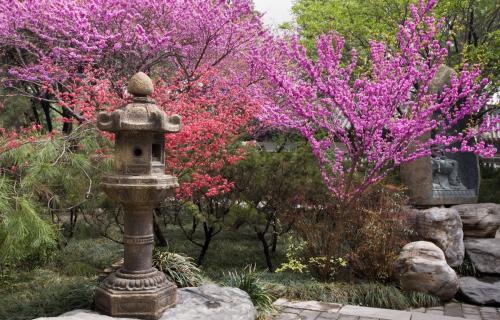 Asian - Zen Garden - Digital Print Backdrop -  8' tall x 12' wide